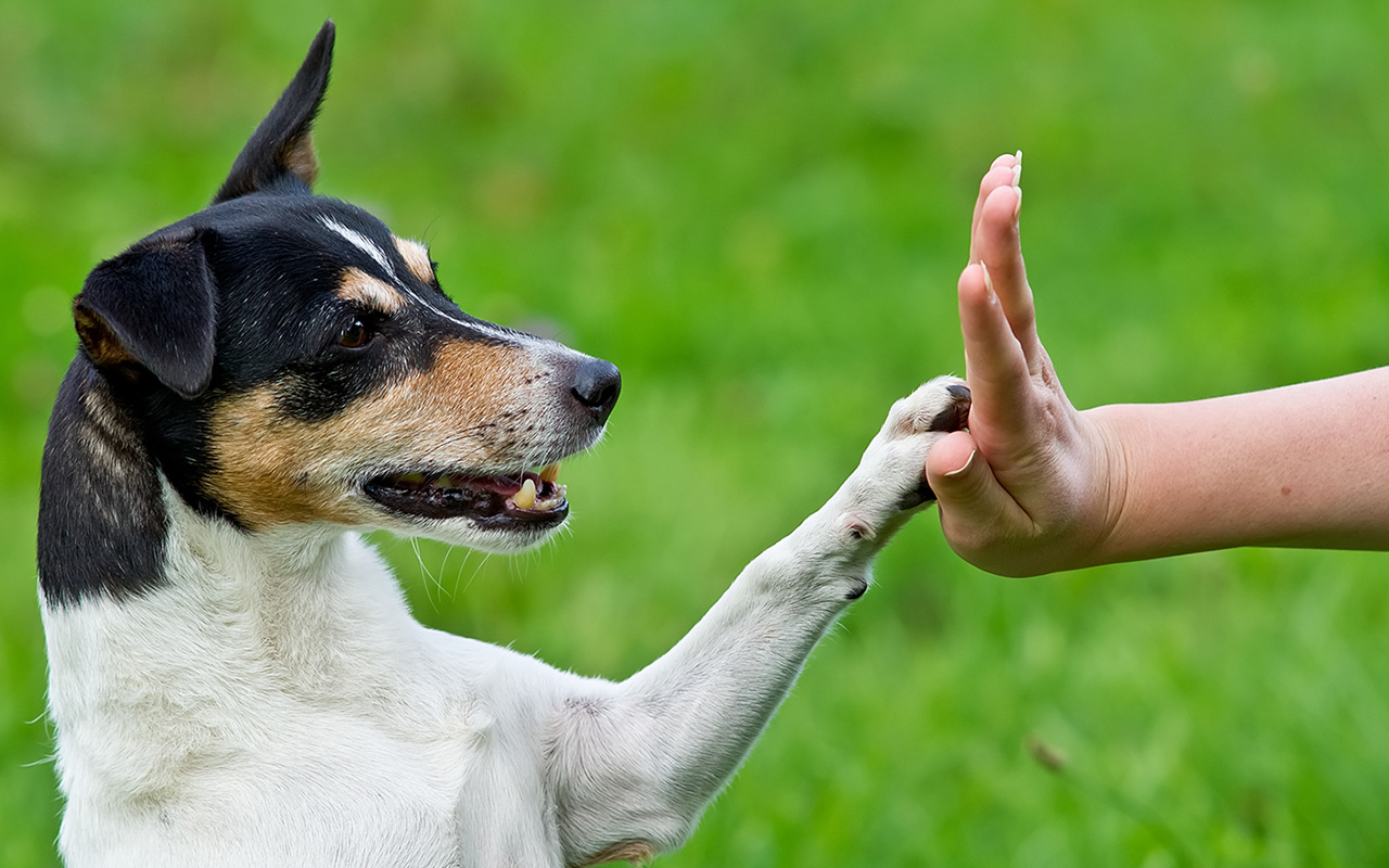 Importance Of Dog Training