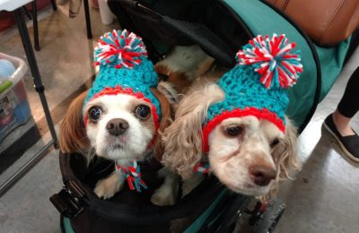 Dog Hats And Why We Need Them For Our Dogs