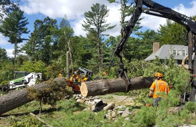 How Tree Removal Can Boost Property Values