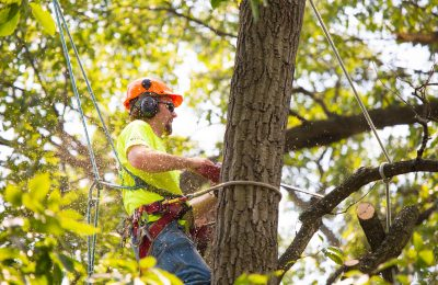 What Are The Benefits of Hiring a Tree Service