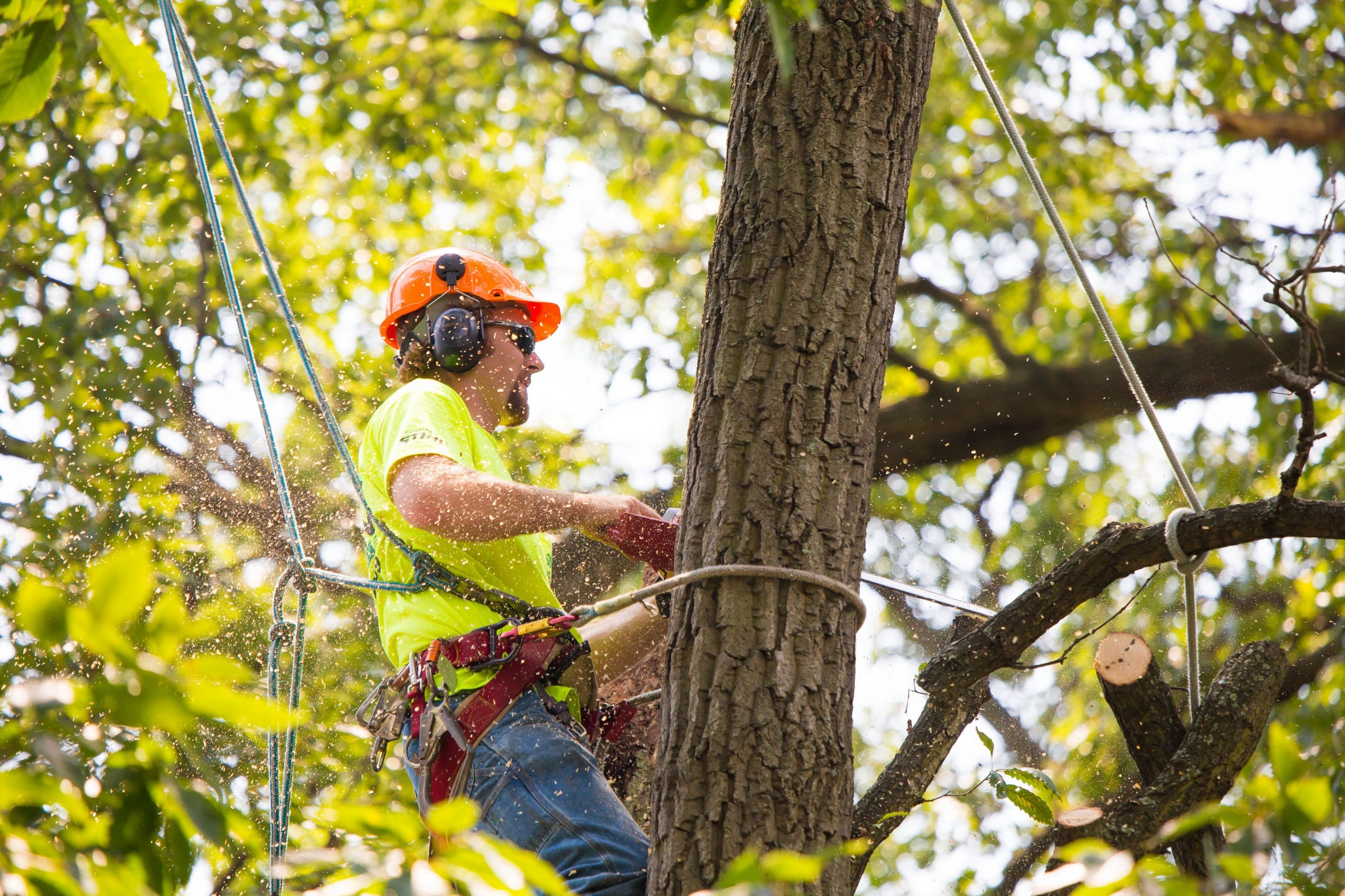 Tree-Removal-Services