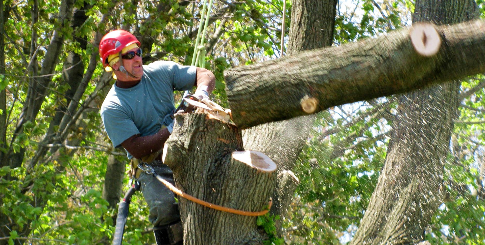 davey tree service employment