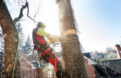 What Questions You Should Ask When Removing Trees
