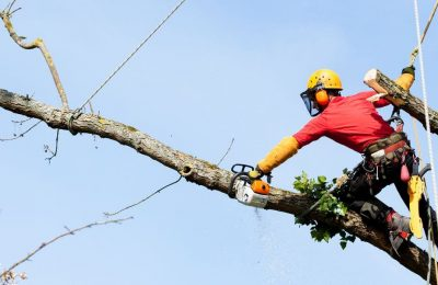 The Ultimate Guide to Tree Care