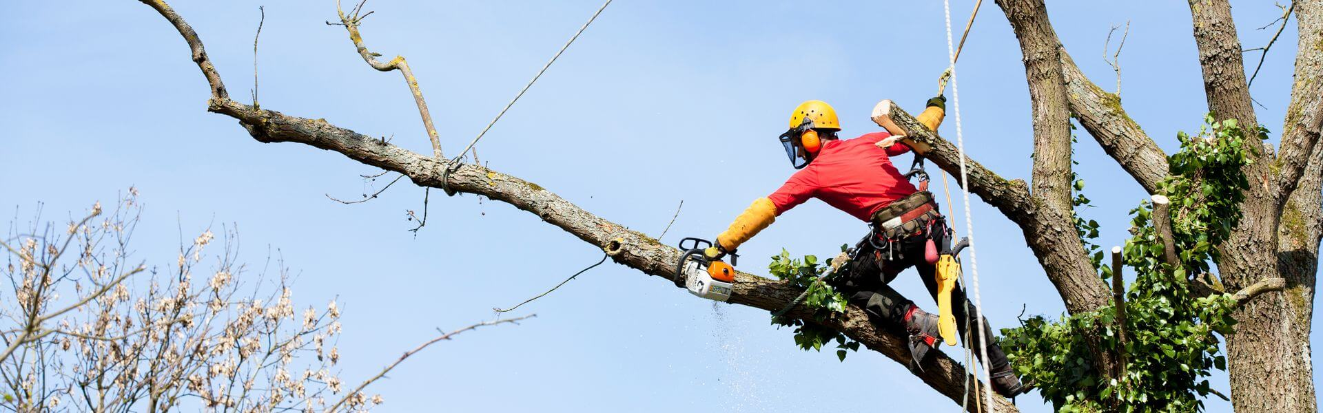 tree removal service yelp