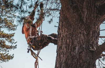 Why Hiring Professionals For Tree Emergencies is a Good Idea