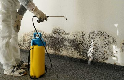 Why You Should Hire a Professional Mold Remediation Company