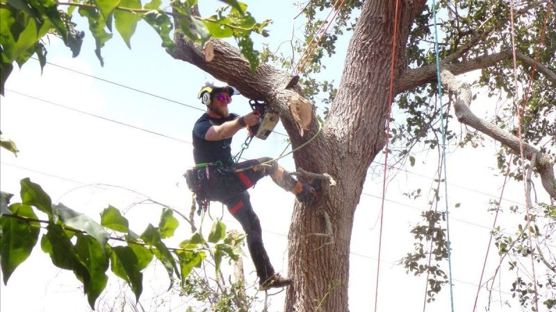 what education is required to be an arborist